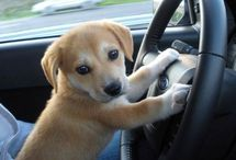 Animals / Welcome to the Favogram Pinterest board for Animals.  If you want to see the cutest animals, funniest animals, and most lovable animals online?  This is the only place for that.  Please like and re-pin our photos!