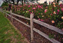 Backyard Landscaping / by Stephanie Lambrecht
