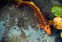 my beautiful fish / by Gigi carruth