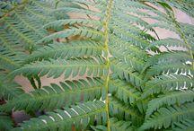 DISTINCTIVE PLANTS
