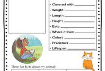 animals class