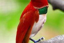 mis pájaros
