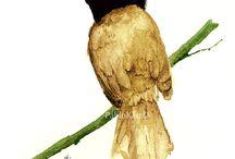 watercolor bird / watercolor bird