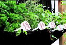 Root Pouch - Pflanztaschen aus PET-Flaschen / Umweltfreundliche Pflanztaschen und Säcke aus recycleten PET-Flaschen für Urban Gardening, Balkon und Stadtgarten