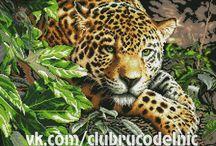 Leopardy, Jaguary i Gepardy