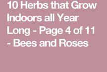 herbs for inside