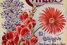 Stare katalogi - ogród