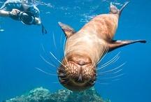 Tengerek, Óceánok állatai