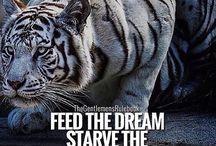 Follow Your Dreams..