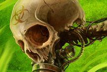 Skulls - biomechanic
