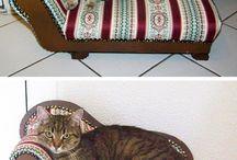 Cats / Katte