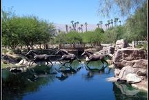 Equestrian Homes / Horse Ranches and more at Griffin Ranch in La Quinta, CA