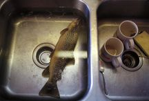 Why is there a fish in my sink