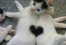 sydämelliset kissat!
