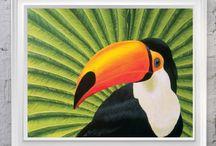 Toucan, toucan, toucan!