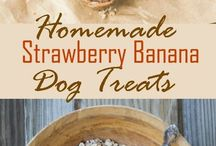 Dog treats + food + nutrition
