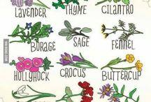 Växter för insekter