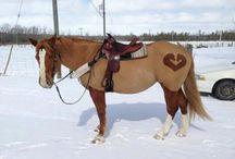 Shaped Horses