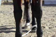Horsemanship/training