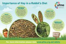 Rabbit education