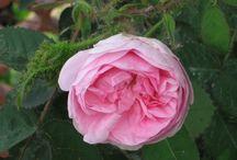 Profumi e colori in casa, in giardino / Piante, fiori....
