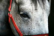 Konie / Zdjęcia koni zpod mojego obiektywu.