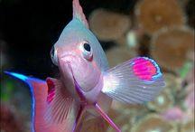 Beautiful fish & sea animals