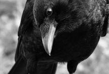 Raven R/search