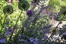 My Cheshire Garden / My summer garden full of romantic flowers and perfume