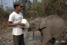 Bottle Feeding Animals / by The International Fund for Animal Welfare - IFAW