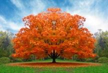 wonderful trees
