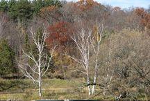 Old Glenwood Park site