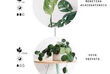 Plants I need!