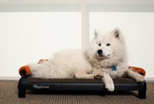 DoggySnooze dog beds / DoggySnooze dog beds are customizable and can be configured to fit your dog's needs and your design preferences. Curious to learn more? http://bit.ly/wbfRGY
