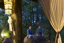 Safari Chique Dinner