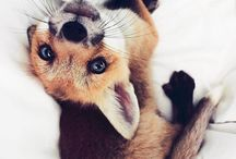 Foxiness