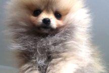 Puppy :-*