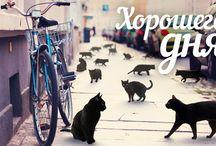 """Промо/плакаты / В этом разделе мы помещаем интересные плакаты, постеры, афиши или промо, созданные дизайнерами телеканала """"Москва 24""""."""
