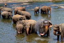 Elephant Experience – Sri Lanka / Set in Sri Lanka along the beautiful Ma Oya river you'll find an exciting hands-on elephant project where your hard work and dedication find a home.Help the local owner and staff care for the elephants.