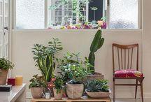 cactus y rincones