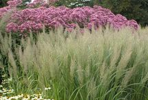Plant landscaping combinations / Perennials, container gardening