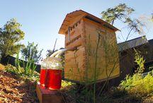 Honey hives
