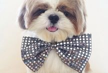 animaux cute