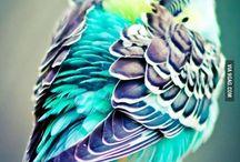 동물(하늘)