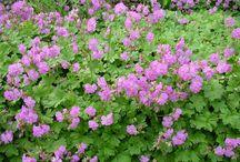 Rosliny do ogrodu przy tarasie / Przy tarasie ze stolem