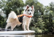 Summer at #UMich / It may be the dog days of summer, but there's still so much going on at U of M!  / by University of Michigan