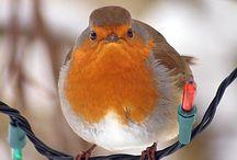 Birds / by Dixie D'Andrea