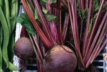 Gyógyító zöldségek
