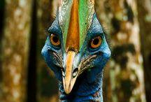amazing birds