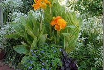 beplante potten , tuinvazen en bakken / mooie beplante potten , tuinvazen en bakken